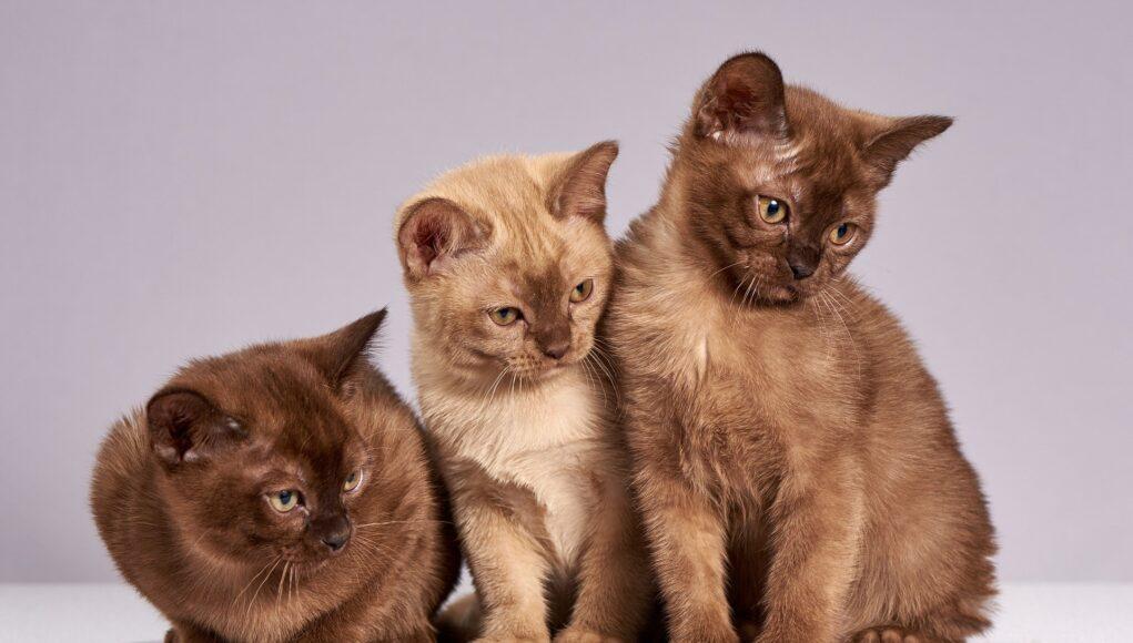 Cute Cats Kittens Animals Mammals Pet